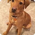 Adopt A Pet :: Abel