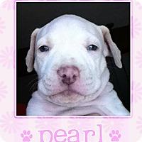 Adopt A Pet :: Pearl - La Quinta, CA
