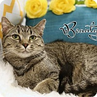 Adopt A Pet :: Beauty female SPONSORED ADOPTION FREE - knoxville, TN