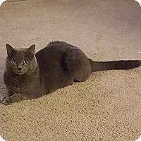 Adopt A Pet :: zz 'Gandalf' courtesy listing - Cincinnati, OH