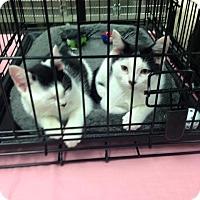 Adopt A Pet :: Sarah - Simpsonville, SC