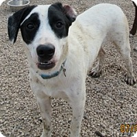 Spaniel (Unknown Type) Mix Dog for adoption in Von Ormy, Texas - Beamer