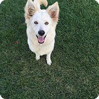 Adopt A Pet :: Winnie - Crystal Lake, IL