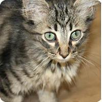 Adopt A Pet :: Lucas - Harrisburg, NC