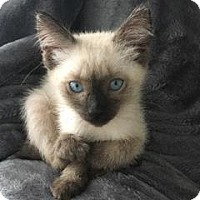 Adopt A Pet :: Gertrude - Austin, TX
