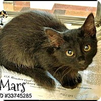 Adopt A Pet :: Mars - Irving, TX