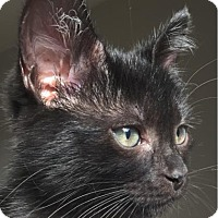 Adopt A Pet :: Mish - Austin, TX
