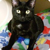 Adopt A Pet :: Justice - Franklin, NH