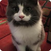 Adopt A Pet :: Bernie - Pendleton, NY