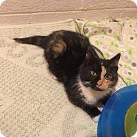 Adopt A Pet :: Scribbles - Millersville, MD