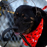 Adopt A Pet :: Gilly - New Roads, LA