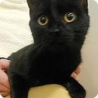 Adopt A Pet :: Brina - Reston, VA