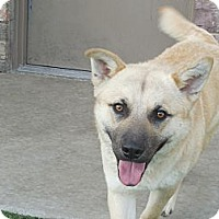 Adopt A Pet :: Leo - white settlment, TX