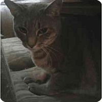 Adopt A Pet :: Izzy  (MM) - Little Falls, NJ