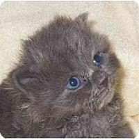 Adopt A Pet :: Frazier - Richmond, VA