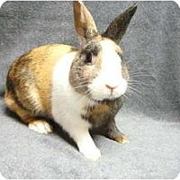Adopt A Pet :: Hans - Newport, DE