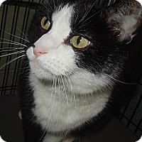 Adopt A Pet :: MooShoo - Medina, OH