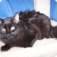 Adopt A Pet :: K-Alice4-Tango - Colorado Springs, CO