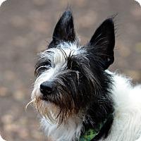Adopt A Pet :: Snafu - Garland, TX