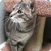 Adopt A Pet :: Littles - Newport Beach, CA