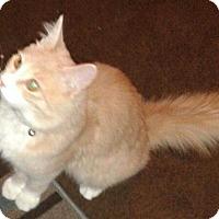 Adopt A Pet :: Alec - Whittier, CA