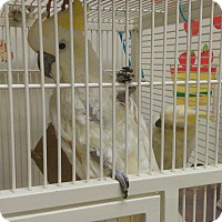 Adopt A Pet :: None - Villa Park, IL