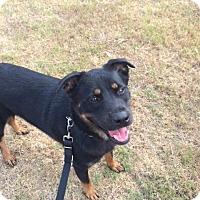 Adopt A Pet :: Tinkerbell - Houston, TX