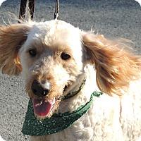 Adopt A Pet :: Fraggle - Washington, DC