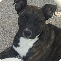 Adopt A Pet :: Pumba - Las Vegas, NV