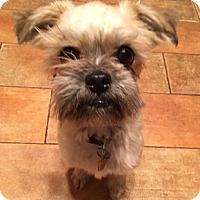 Adopt A Pet :: Otis - Oakland, CA
