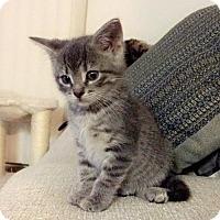 Adopt A Pet :: Nugget - Livonia, MI