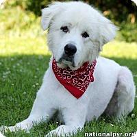 Adopt A Pet :: Midas - pending - Beacon, NY