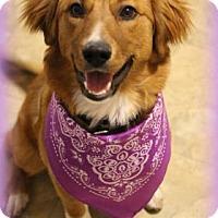 Adopt A Pet :: Annabelle - Flagstaff, AZ