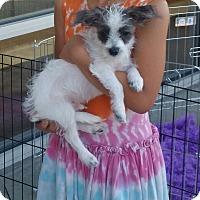 Adopt A Pet :: Ripley - La Verne, CA