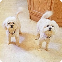 Adopt A Pet :: Sissy and Sassy - Kendall, NY