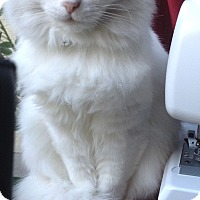 Adopt A Pet :: Nina - Laguna Woods, CA