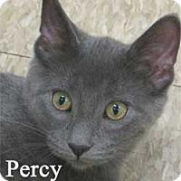 Adopt A Pet :: Percy - Warren, PA