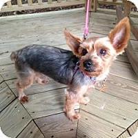 Adopt A Pet :: Samson - Miami, FL