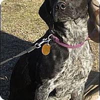 Adopt A Pet :: Joy - Somers, CT