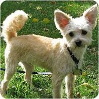 Adopt A Pet :: Oliver - Carmine, TX