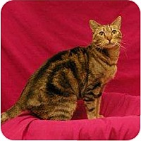 Adopt A Pet :: Polly - Sacramento, CA