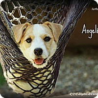 Adopt A Pet :: Angelina - Southington, CT