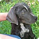 Adopt A Pet :: Briggs
