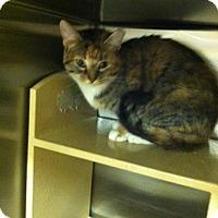 Adopt A Pet :: Emerald - Muncie, IN