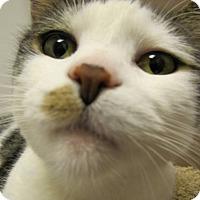 Adopt A Pet :: Lola - Albany, NY