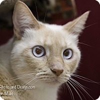 Adopt A Pet :: Prince - Fountain Hills, AZ