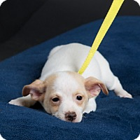 Adopt A Pet :: Honey - Nuevo, CA