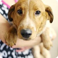 Adopt A Pet :: Snowberry - Appleton, WI
