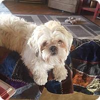 Adopt A Pet :: Ralphie - Ogden, UT