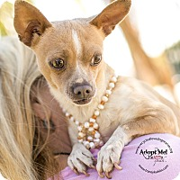 Chihuahua Dog for adoption in Inland Empire, California - CHIQUILIN